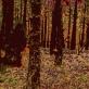 """""""Pabradės kūdikis"""" Tai medžio turinčio nieščiosios pilvą fotografija. Kadangi nuotrauka padaryta buvo pratybų metu Pabradėje, užsimaskavęs ir lengvai nepastebimas medis atspindi mane tuo metu-susiliejančią ir pasislėpusią."""