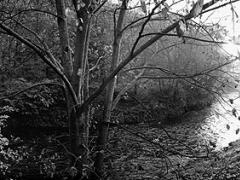 Stanislovo Žvirgždo fotografinė ramybė