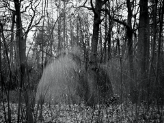 Miškuose užmintos mįslės