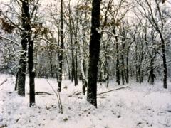 Jameso Benningo kraštovaizdžio filmai