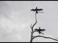 Paukščio požiūriu