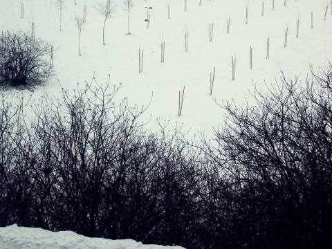 Remigijus Pačėsa, be pavadinimo, 2011-01-25
