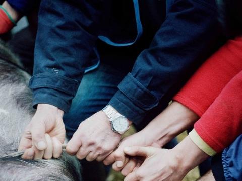 """Fábio Cunha, iš serijos """"Mes vis dar žudome kiaules savomis rankomis""""."""