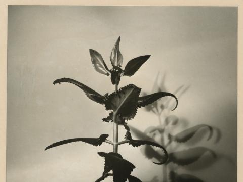 """Remigijus Pačėsa, """"Viešas augalų gyvenimas"""". 1985 m."""