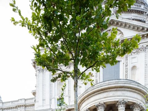 """Projektas """"The Building Site"""" Londono architektūros festivalyje"""