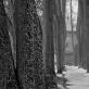 """Dmitrijus Matvejevas, """"Alėja žiemą"""". 2000 m."""