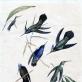 Konstantinas Tyzenhauzas. Kolibriai. XIX a. I p. Rokiškio krašto muziejus