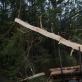 Neringos miško architektūra: rezidencija, tyrimas ir programa