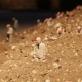 "Isaac Cordal. ""Sek paskui vadus"". 2012 m. L. Buivydaitė-Milkintės nuotr."