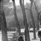 """Juozas Budraitis, """"Sen Mišelio bulvaras, šalia Liuksemburgo sodo"""", Paryžius. 1979 m. Iš autoriaus archyvo"""