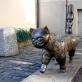 "Regimantas Midvikis, ""Senamiesčio katinas"". 1979 m."