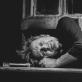 """Michailas Baryšnikovas spektaklio """"Brodskis / Baryšnikovas"""" repeticijoje. T. Ivanausko nuotr."""