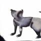 Diana Remeikytė. Fantastiniai gyvūnai, akvarelė ant estampinio popieriaus, 54x78cm. 2021 m.