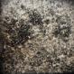 """Meilė Sposmanytė koliažas """"Europos peizažai II"""". 2010 m. Pienių pūkai, jūržolės, pelenai, plaukai, drobė, 54 x 54 cm"""