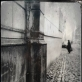 """Galerija """"si:said"""" pristato Juozapo Kalniaus fotografijų parodą"""