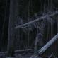 """Kadras iš Rugilės Barzdžiukaitės filmo """"Rūgštus miškas"""""""