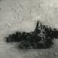 "Juozo Kazlausko (1941–2002) fotografijų paroda ""Baltoji tyla"""