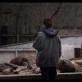 Šiaurės menų festivalyje –  Lauryno Bareišos filmų programa