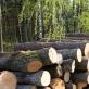 Nidos meno kolonija pradeda Neringos miško architektūros ekskursijų ciklą