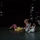 """Tchekpo šokių trupės spektalis """"Pourquoi pas...?"""" / """"Kodėlgi ne...?"""", nuotr. S. Baturos"""