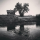 Virginijus Kinčinaitis, Merkio upė. 2015 m.