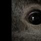 """""""Animus animalis (istorija apie žmones, žvėris ir daiktus)"""""""