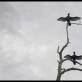 """Kadras iš Rugilės Barzdžiukaitės dokumentinio filmo """"Rūgštus miškas"""""""