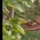 """Kadras iš filmo""""Kolektyviniai sodai"""""""