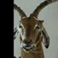 """Kadras iš filmo """"Animus Animalis"""""""